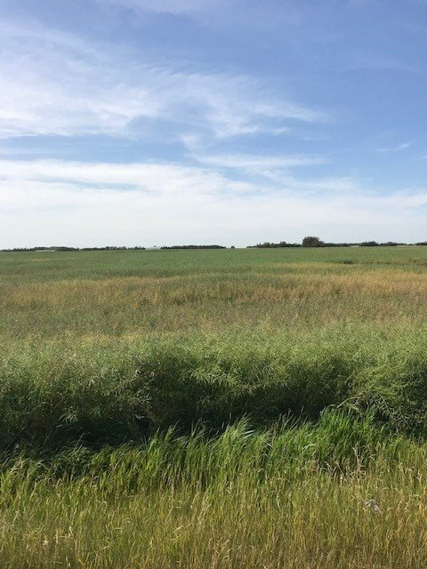 Main Photo: RR 261 TWP RD 554: Rural Sturgeon County Rural Land/Vacant Lot for sale : MLS®# E4216086