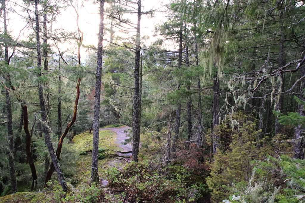 "Main Photo: Lot 98 KLAHANIE Drive in Sechelt: Sechelt District Land for sale in ""Sandy Hook"" (Sunshine Coast)  : MLS®# R2439971"
