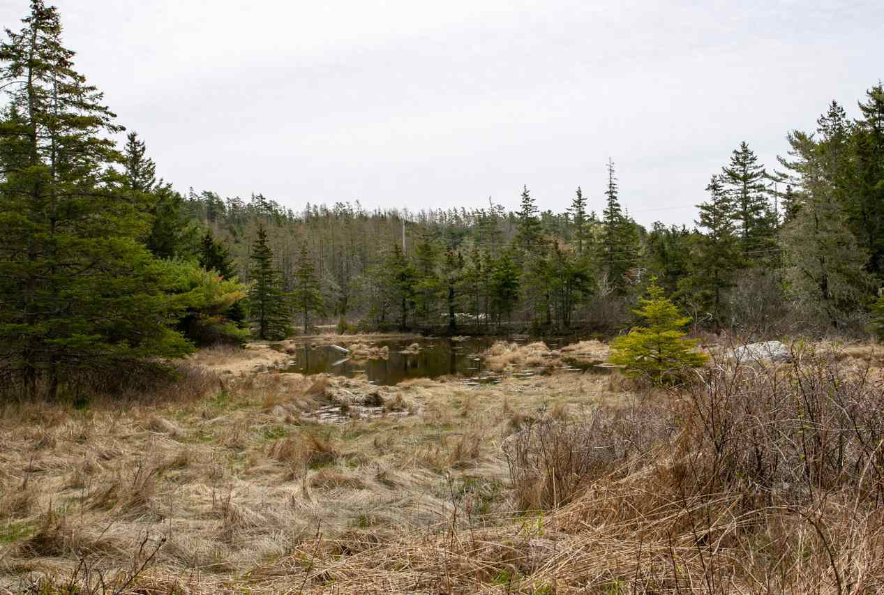Photo 8: Photos: 46 Whynacht's Point Road in Tantallon: 40-Timberlea, Prospect, St. Margaret`S Bay Residential for sale (Halifax-Dartmouth)  : MLS®# 202008214