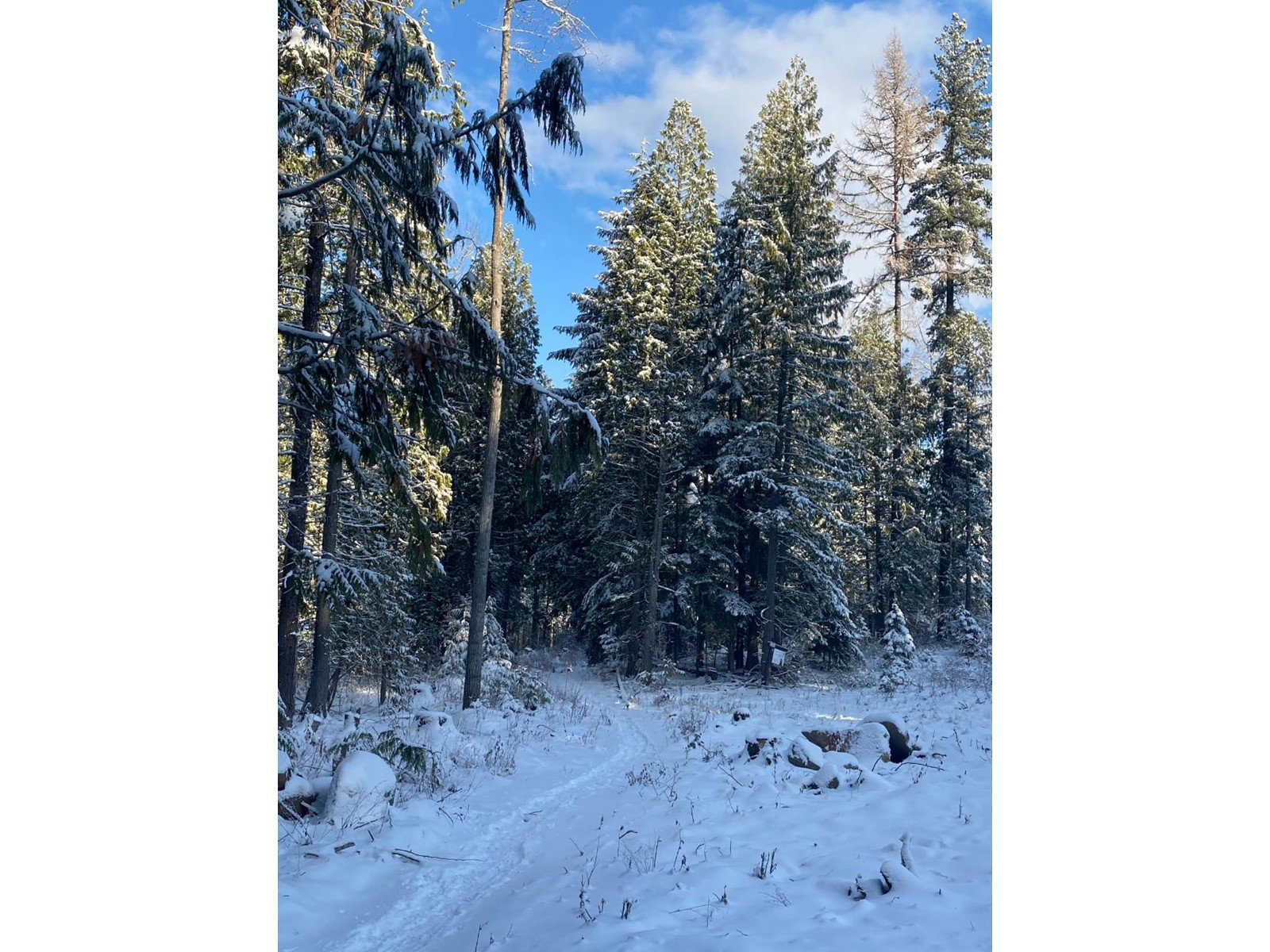 Main Photo: Lot 11 RED MOUNTAIN ROAD in Rossland: Vacant Land for sale : MLS®# 2455889