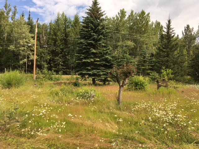 Photo 5: Photos: 1958 W SALES Road in Quesnel: Red Bluff/Dragon Lake Land for sale (Quesnel (Zone 28))  : MLS®# R2394023