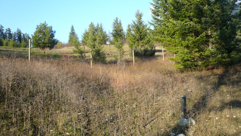 Photo 4: Photos: 422 Richview Road in Tappen / Sunny Brae: Shuswap Land Only for sale (Sunny Brae / Tappen)  : MLS®# 9181758