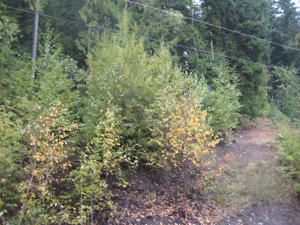 Main Photo: 12 Vickers Trail in Anglemont: Land Only for sale : MLS®# 10055802