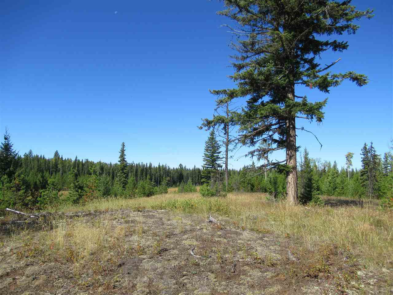 Photo 13: Photos: DL 6426 TONKA Road: 150 Mile House Land for sale (Williams Lake (Zone 27))  : MLS®# R2497364