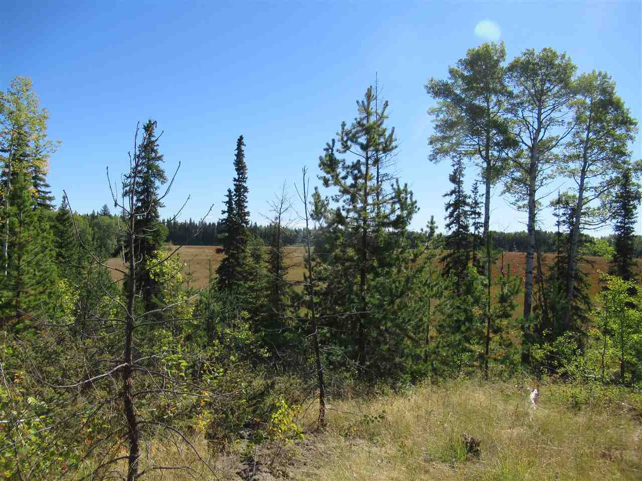 Photo 10: Photos: DL 6426 TONKA Road: 150 Mile House Land for sale (Williams Lake (Zone 27))  : MLS®# R2497364