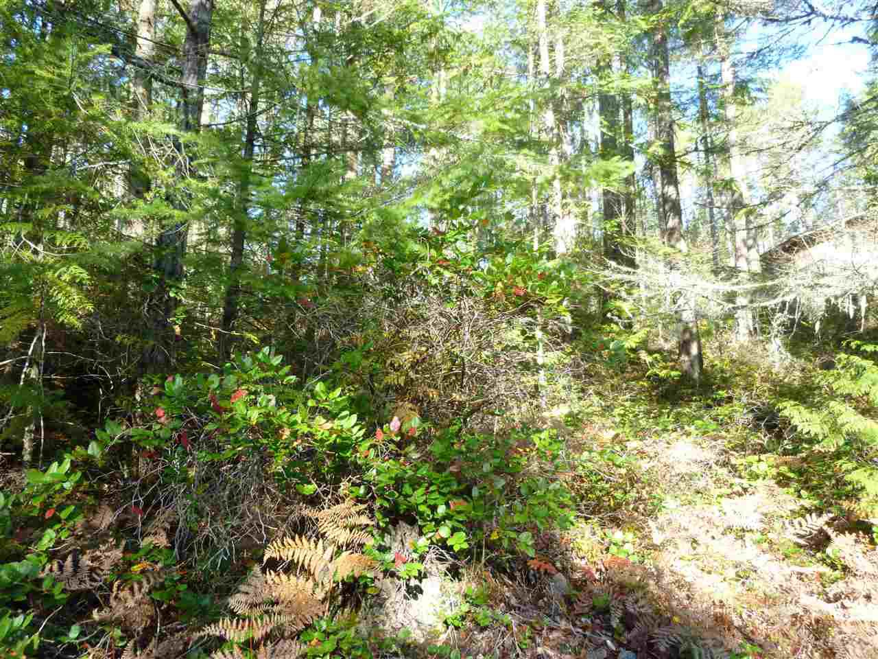 Main Photo:  in Pender Harbour: Pender Harbour Egmont Land for sale (Sunshine Coast)  : MLS®# R2414999