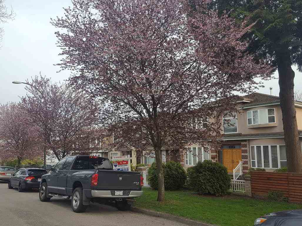 Photo 2: Photos: 458 E 63RD Avenue in Vancouver: South Vancouver House for sale (Vancouver East)  : MLS®# R2185714
