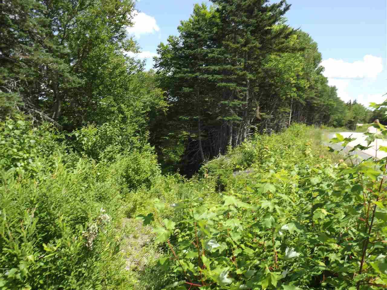 Photo 10: Photos: Trout Brook Road in Albert Bridge: 210-Marion Bridge Vacant Land for sale (Cape Breton)  : MLS®# 201919549