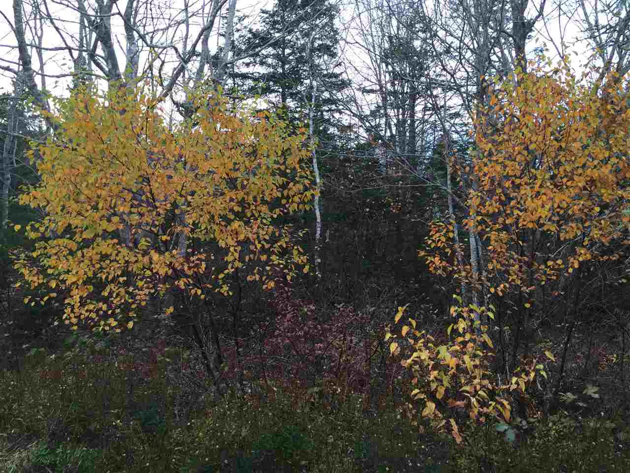 Photo 2: Photos: Lot 4 Beech Hill Road in Hunt's Point: 406-Queens County Vacant Land for sale (South Shore)  : MLS®# 201728019