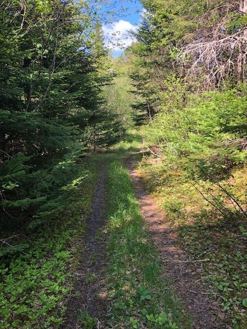Main Photo: 179 Portage Road in Wilburn: 306-Inverness County / Inverness & Area Vacant Land for sale (Highland Region)  : MLS®# 202001392
