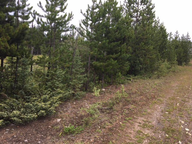 """Photo 9: Photos: 9301 HARRINGTON PIT Road in Quesnel: Quesnel - Rural West Land for sale in """"NAZKO"""" (Quesnel (Zone 28))  : MLS®# R2392448"""