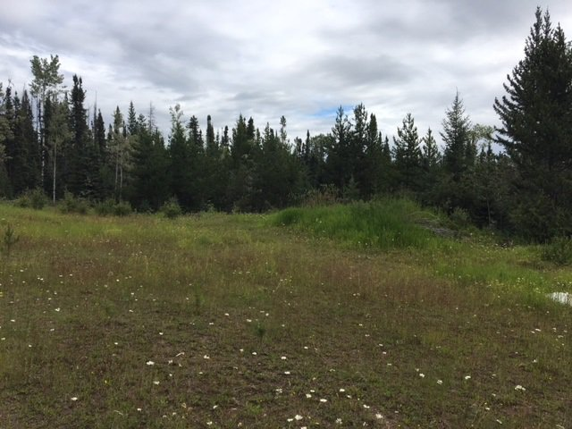 """Photo 11: Photos: 9301 HARRINGTON PIT Road in Quesnel: Quesnel - Rural West Land for sale in """"NAZKO"""" (Quesnel (Zone 28))  : MLS®# R2392448"""