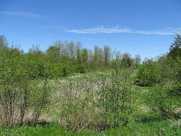 Photo 14: Photos: B33935 Thorah Sideroad in Brock: Beaverton Freehold for sale : MLS®# N3812114
