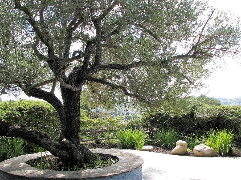 Photo 2: Photos: RANCHO BERNARDO House for sale : 5 bedrooms : 12941 Abra Drive in San Diego