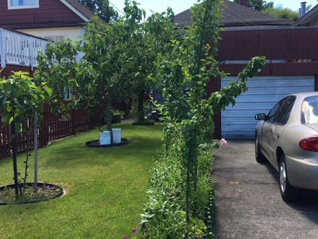 Photo 9: Photos: 531 E 17TH Avenue in Vancouver: Fraser VE House for sale (Vancouver East)  : MLS®# R2278669