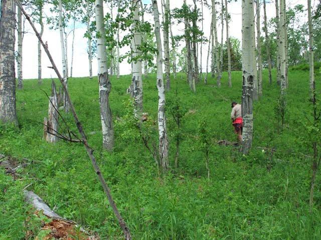 Main Photo: DL 459 TATALROSE Road in Burns Lake: South Francois Land for sale (Burns Lake (Zone 55))  : MLS®# R2253116