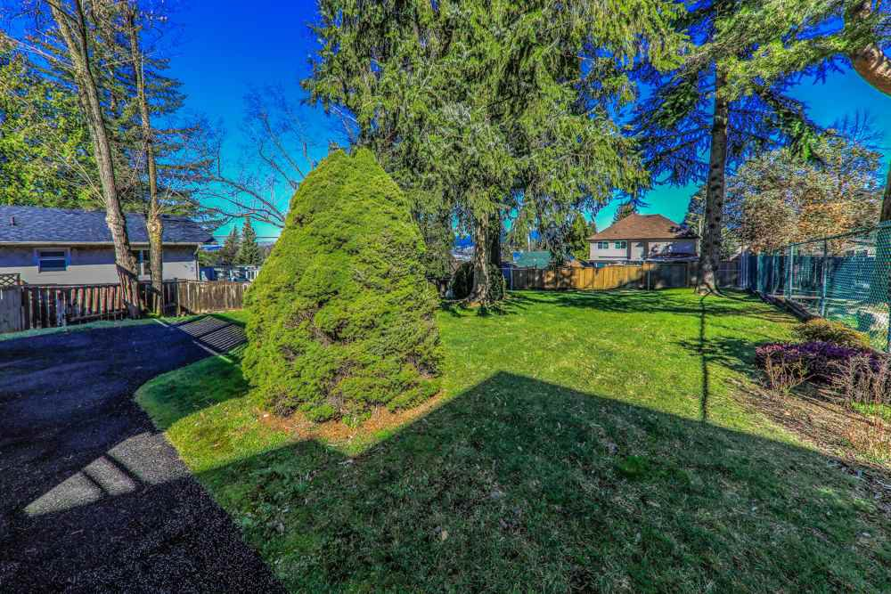 Photo 18: Photos: 14067 113A Avenue in Surrey: Bolivar Heights House for sale (North Surrey)  : MLS®# R2387491