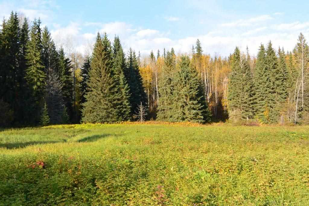 "Main Photo: 161 HELEN LAKE Road: Hazelton Land for sale in ""KISPIOX VALLEY"" (Smithers And Area (Zone 54))  : MLS®# R2355392"