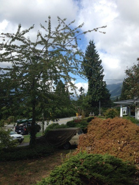 Photo 4: Photos: 4424 SKYLINE Drive in NORTH VANC: Forest Hills NV House for sale (North Vancouver)  : MLS®# R2002318