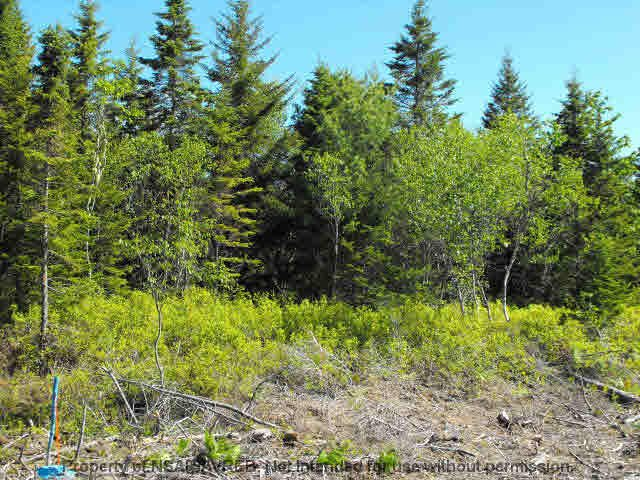 Photo 3: Photos: LOT 4 COOKS BROOK DIVERSION HWY 332 in Bayport: 405-Lunenburg County Vacant Land for sale (South Shore)  : MLS®# 5028510