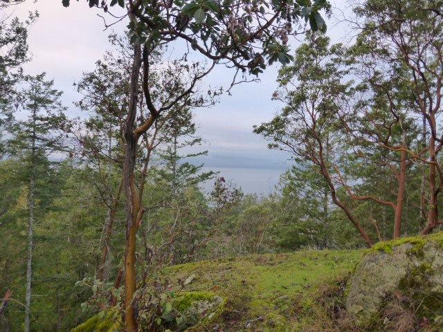 "Main Photo: LOT 3 WOOD BAY RIDGE ROAD in Haldi: Halfmn Bay Secret Cv Redroofs Land for sale in ""ARBUTUS RIDGE"" (Sunshine Coast)  : MLS®# R2016094"
