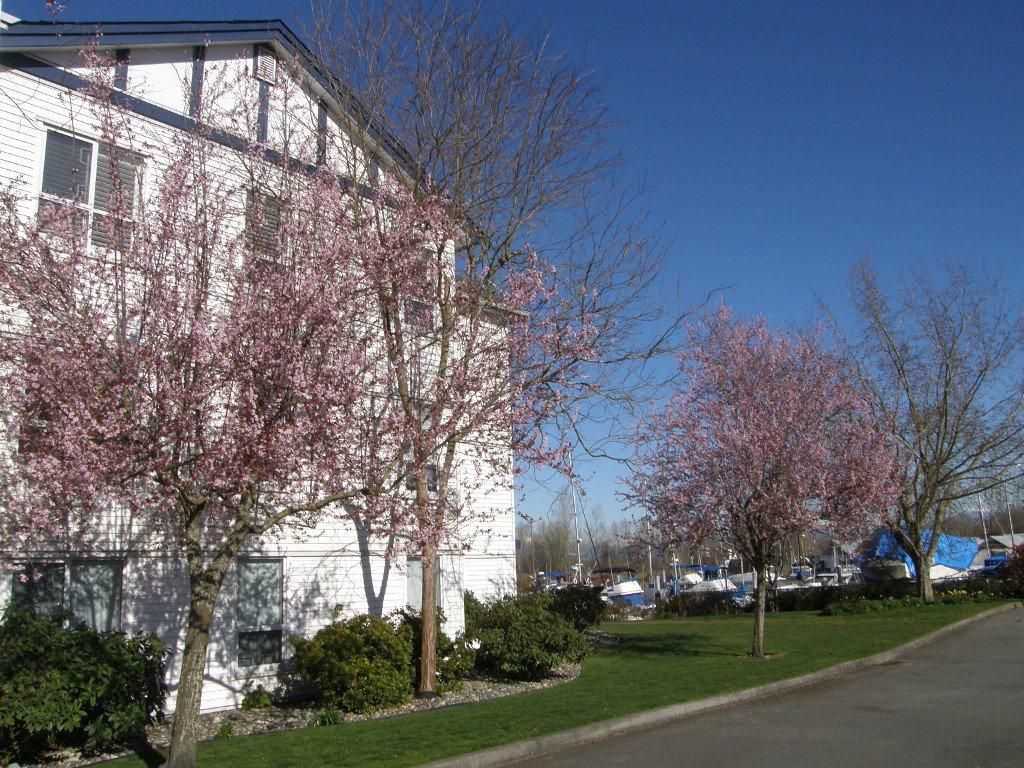 "Photo 27: Photos: 112 4955 RIVER Road in Delta: Neilsen Grove Condo for sale in ""SHOREWALK"" (Ladner)  : MLS®# R2047368"