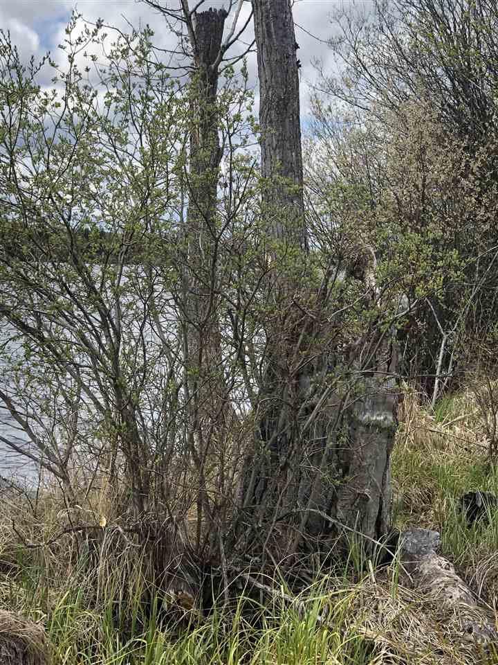 "Photo 16: Photos: LOT 1 BRANCH Drive in Williams Lake: Williams Lake - Rural East Land for sale in ""ROSE LAKE"" (Williams Lake (Zone 27))  : MLS®# R2374052"