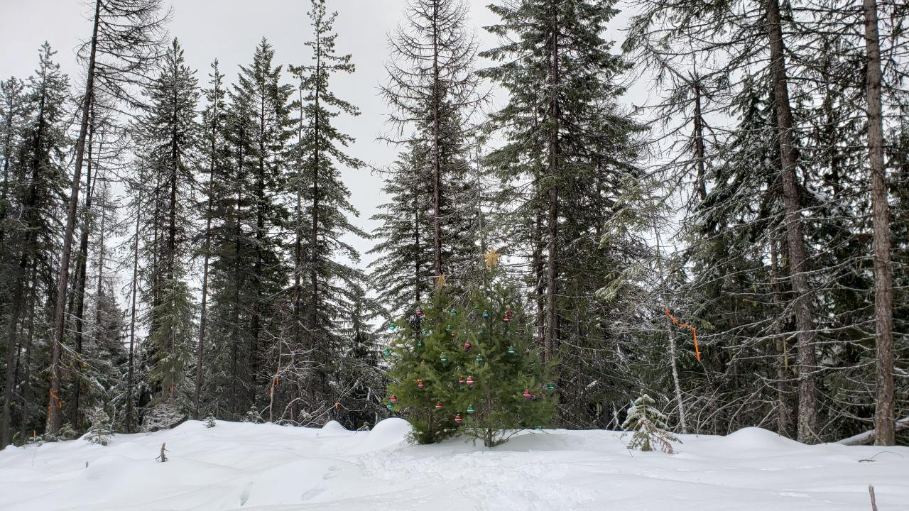 Main Photo: Lot 2 RED MOUNTAIN ROAD in Rossland: Vacant Land for sale : MLS®# 2455879