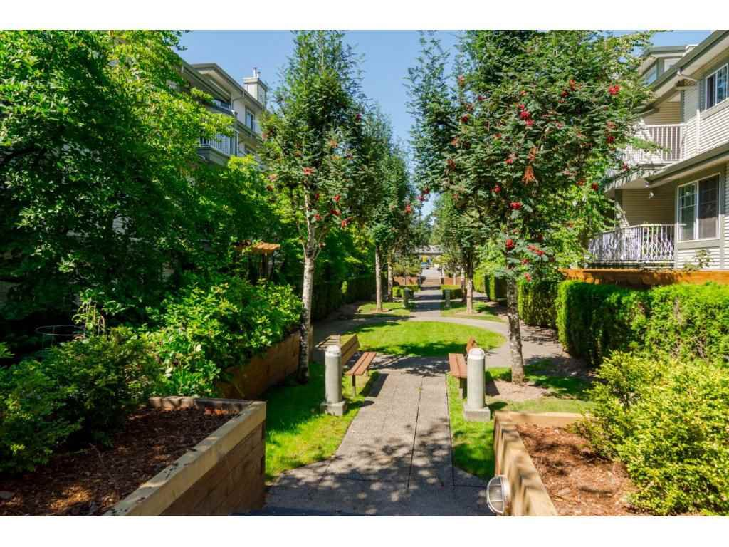 """Photo 18: Photos: 69 8892 208 Street in Langley: Walnut Grove Townhouse for sale in """"Hunter's Run"""" : MLS®# R2093333"""