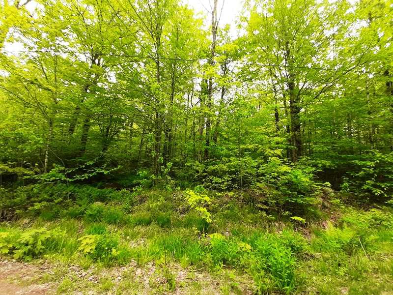 Main Photo: Lot N5 Nature Heaven Road in Lake Paul: 404-Kings County Vacant Land for sale (Annapolis Valley)  : MLS®# 202009527