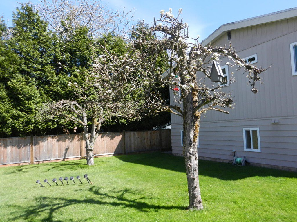 Photo 46: Photos: 6163 172 Street in Surrey: Cloverdale BC House for sale (Cloverdale)  : MLS®# R2137585