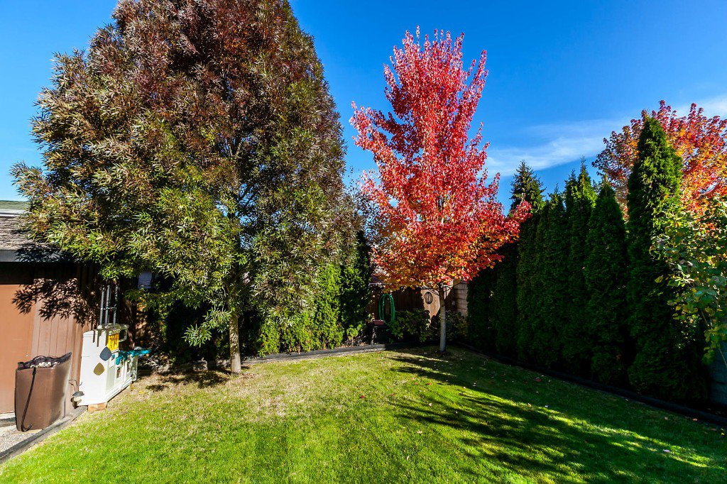 Photo 44: Photos: 4936 207b Street in Langley: Langley City House for sale : MLS®# R2117178