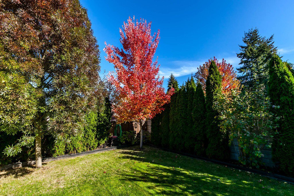Photo 43: Photos: 4936 207b Street in Langley: Langley City House for sale : MLS®# R2117178
