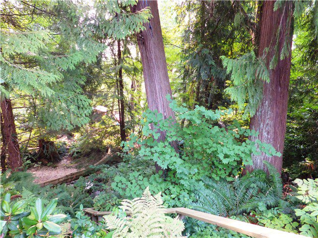 Photo 9: Photos: 3580 SUNSET Boulevard in North Vancouver: Edgemont House for sale : MLS®# V1081477