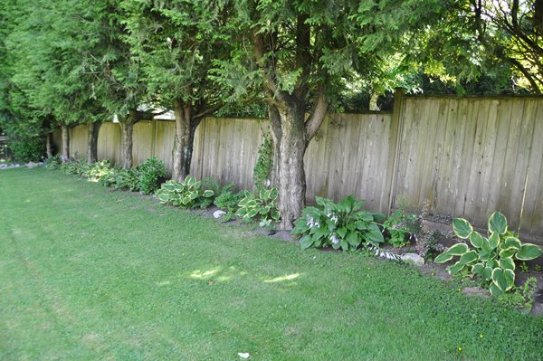 """Photo 3: Photos: 32865 12TH Avenue in Mission: Mission BC House for sale in """"CEDAR/CADE BARR"""" : MLS®# F1304927"""