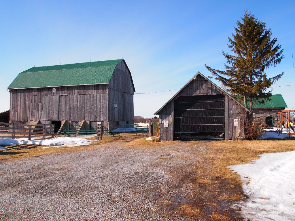 Photo 19: Photos: 515 Glenarm Road in Kawartha Lakes: Freehold for sale : MLS®# X3145045