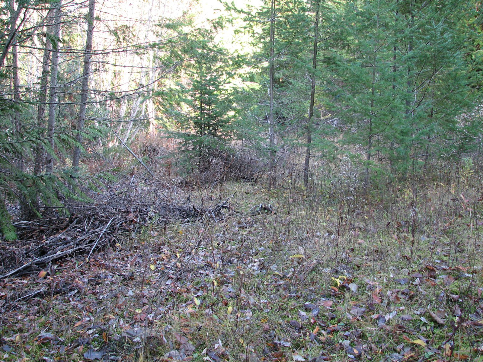 Main Photo: Lot 1 Trans Canada Hwy: Sorrento Land Only for sale (Shuswap)  : MLS®# 10171991