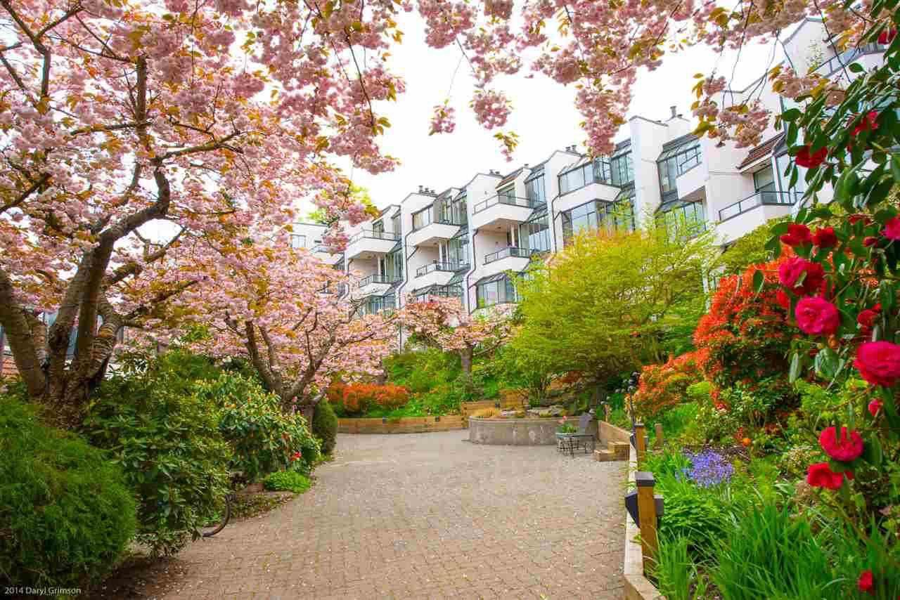 Alder Bay's cherry blossom courtyard