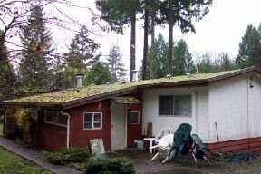 Photo 5: Photos: 23263 BIRCH AV in Maple Ridge: Silver Valley House for sale : MLS®# V566576