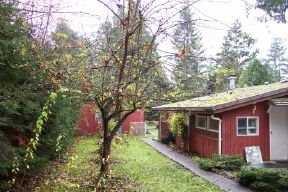 Photo 3: Photos: 23263 BIRCH AV in Maple Ridge: Silver Valley House for sale : MLS®# V566576