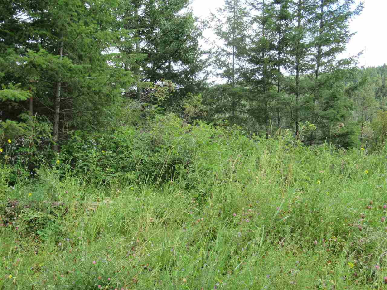 Photo 7: Photos: LOT A FIRDALE Drive in Williams Lake: Williams Lake - Rural North Land for sale (Williams Lake (Zone 27))  : MLS®# R2485053