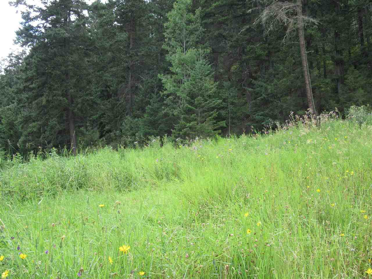 Photo 9: Photos: LOT A FIRDALE Drive in Williams Lake: Williams Lake - Rural North Land for sale (Williams Lake (Zone 27))  : MLS®# R2485053
