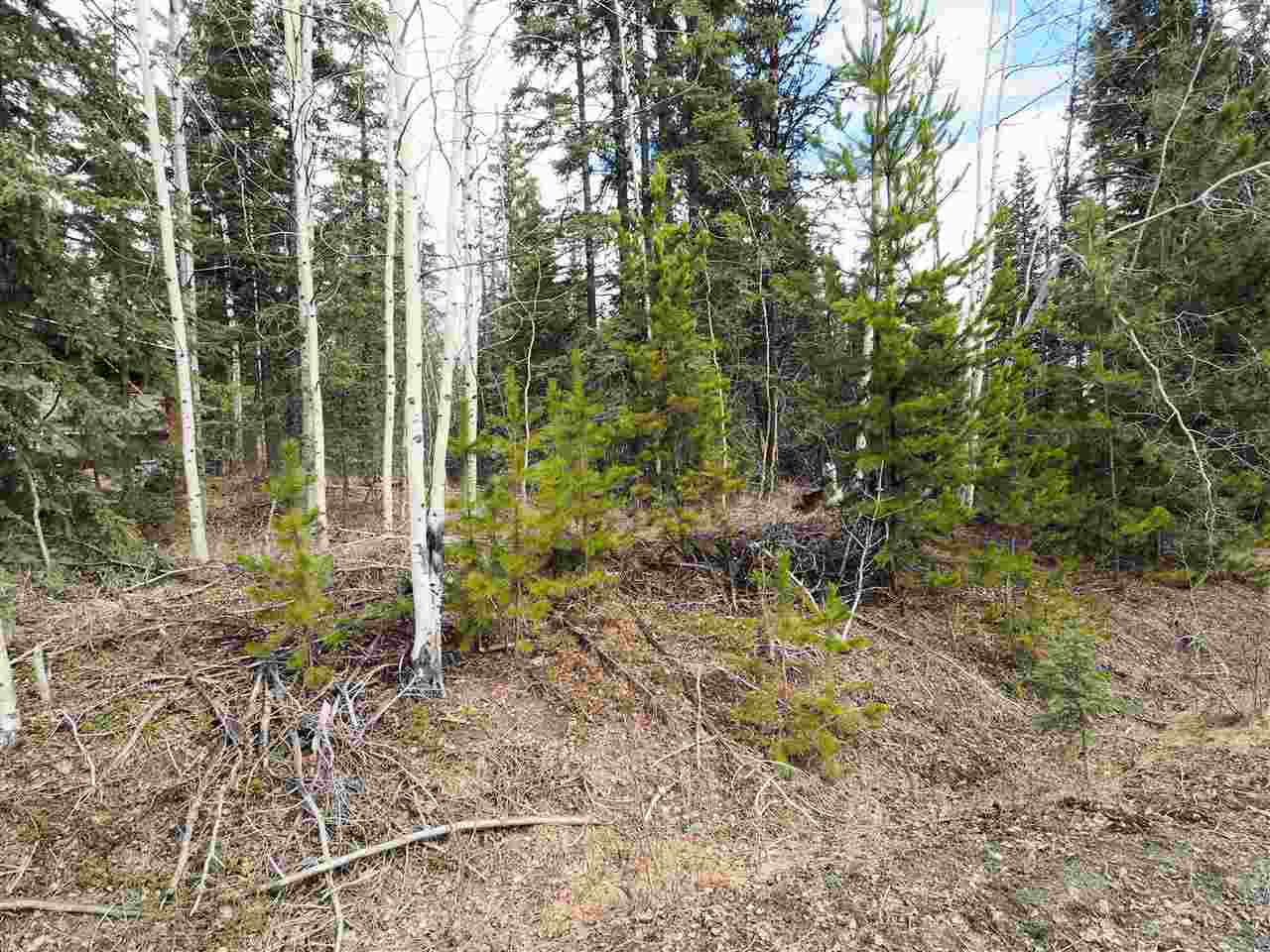 Photo 4: Photos: LOT 216 LUDLOM Road: Deka Lake / Sulphurous / Hathaway Lakes Land for sale (100 Mile House (Zone 10))  : MLS®# R2397846
