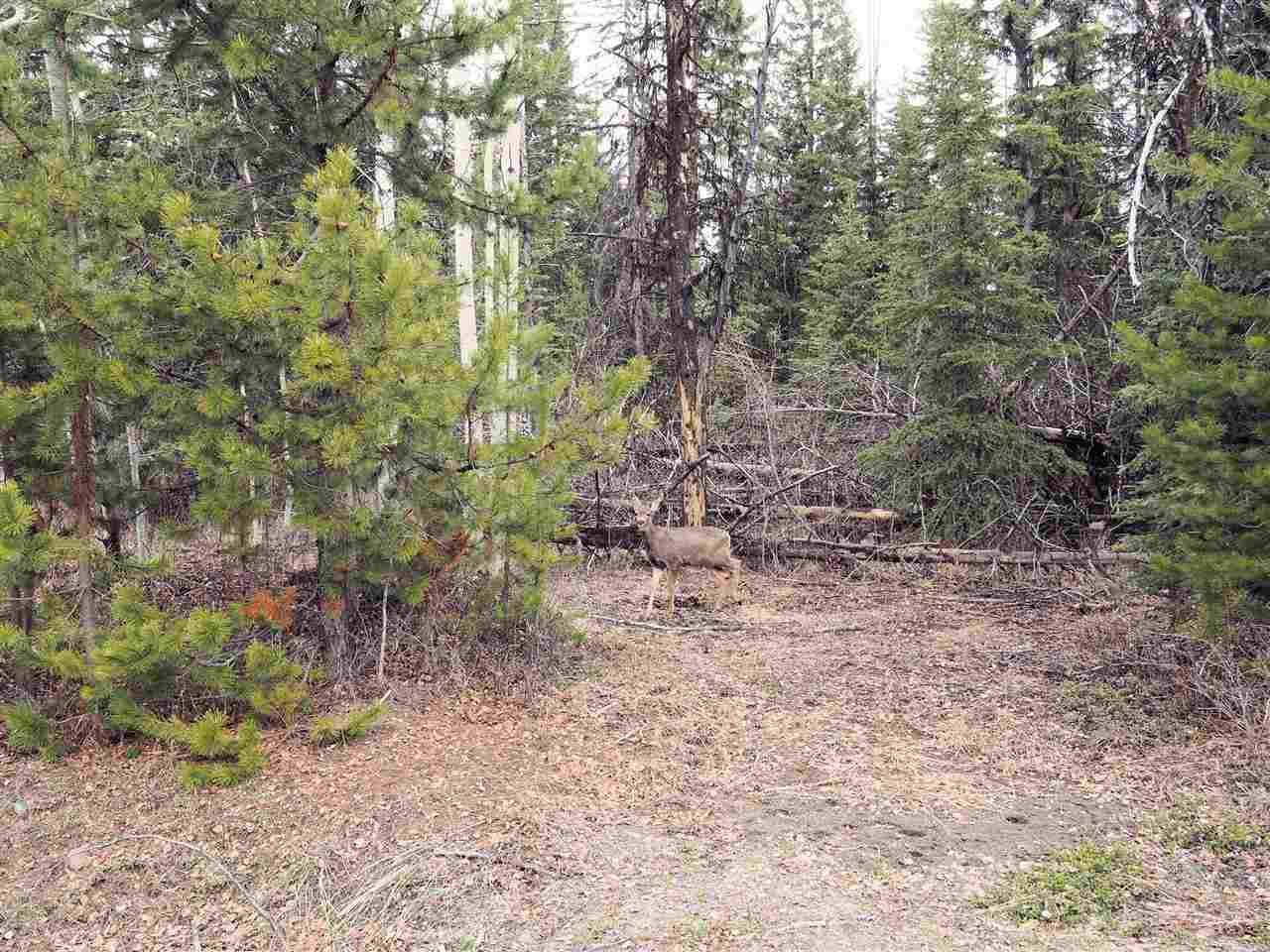 Main Photo: LOT 216 LUDLOM Road: Deka Lake / Sulphurous / Hathaway Lakes Land for sale (100 Mile House (Zone 10))  : MLS®# R2397846
