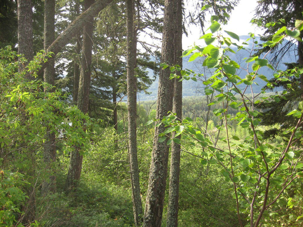 Main Photo: 12 2481 Squilax Anglemont Road in Lee Creek: Land Only for sale : MLS®# 10065844