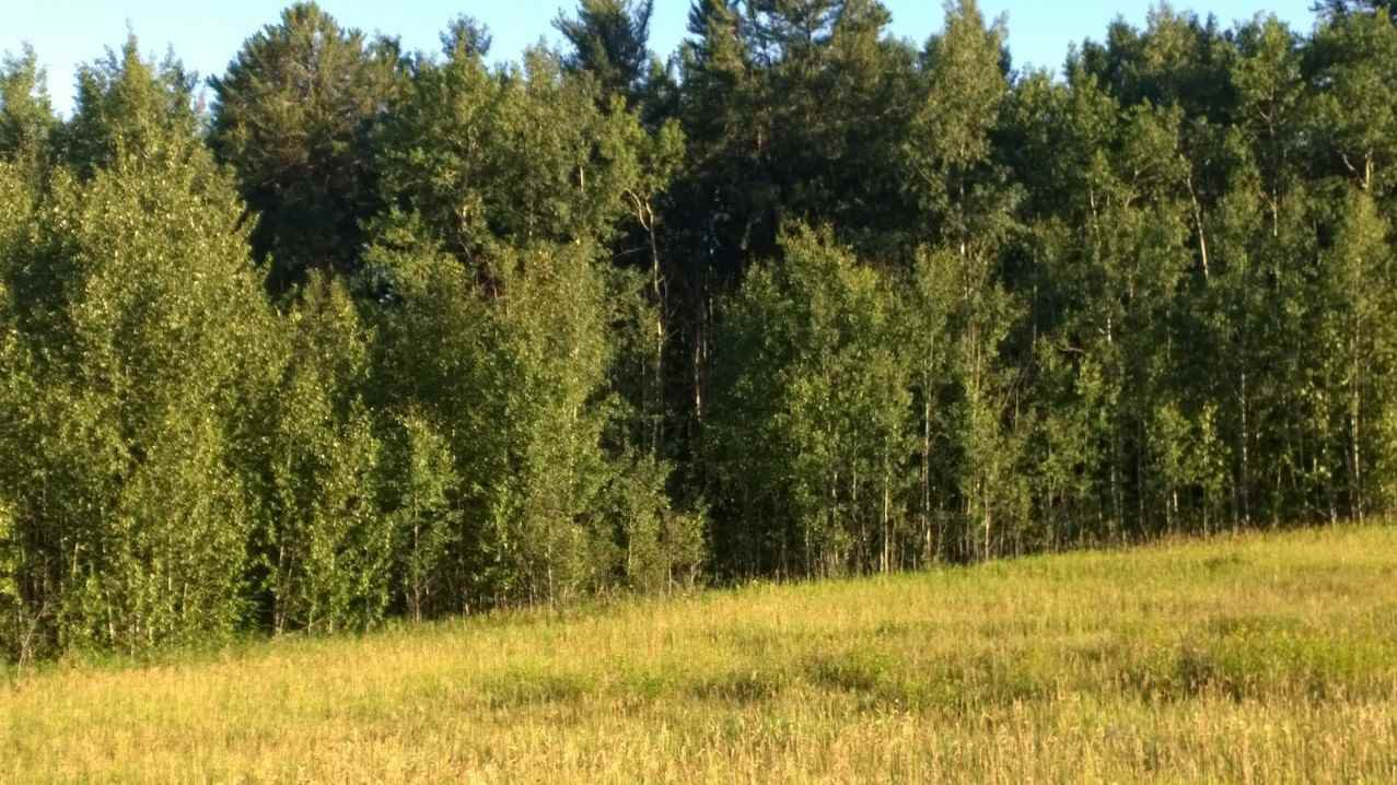 Main Photo: #3-51227 RGE RD 270 Road: Rural Parkland County Rural Land/Vacant Lot for sale : MLS®# E4133466
