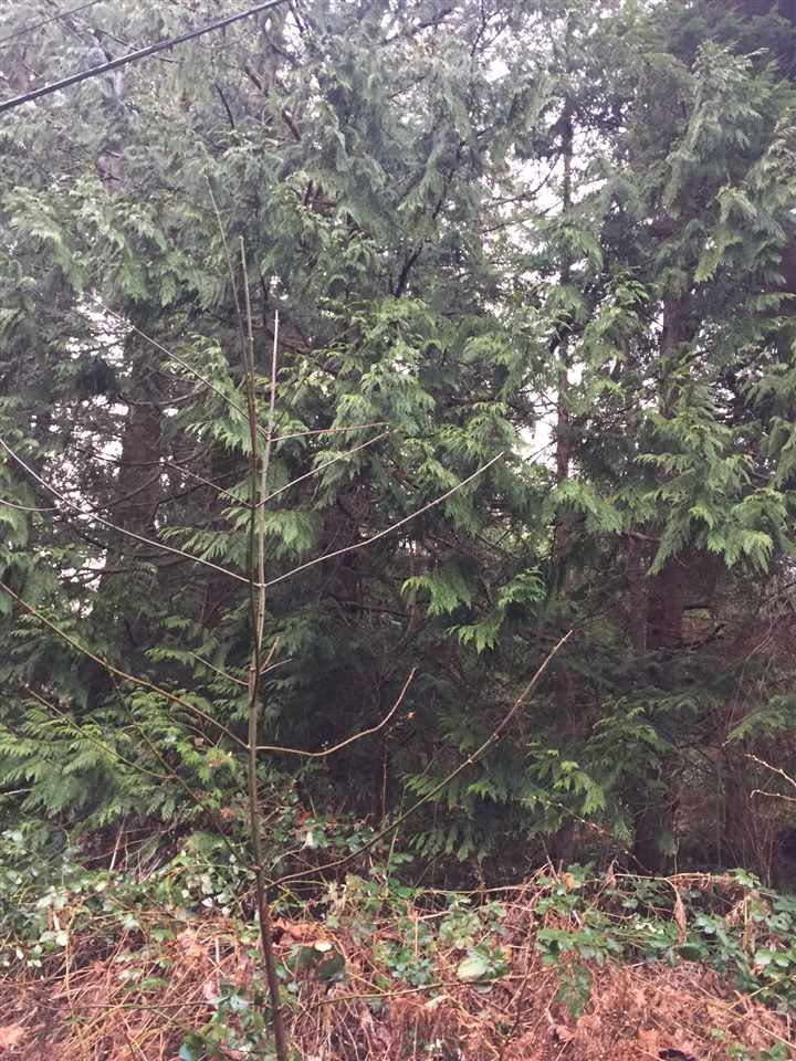 Photo 9: Photos: LOT D HEAL Road: Roberts Creek Land for sale (Sunshine Coast)  : MLS®# R2149518