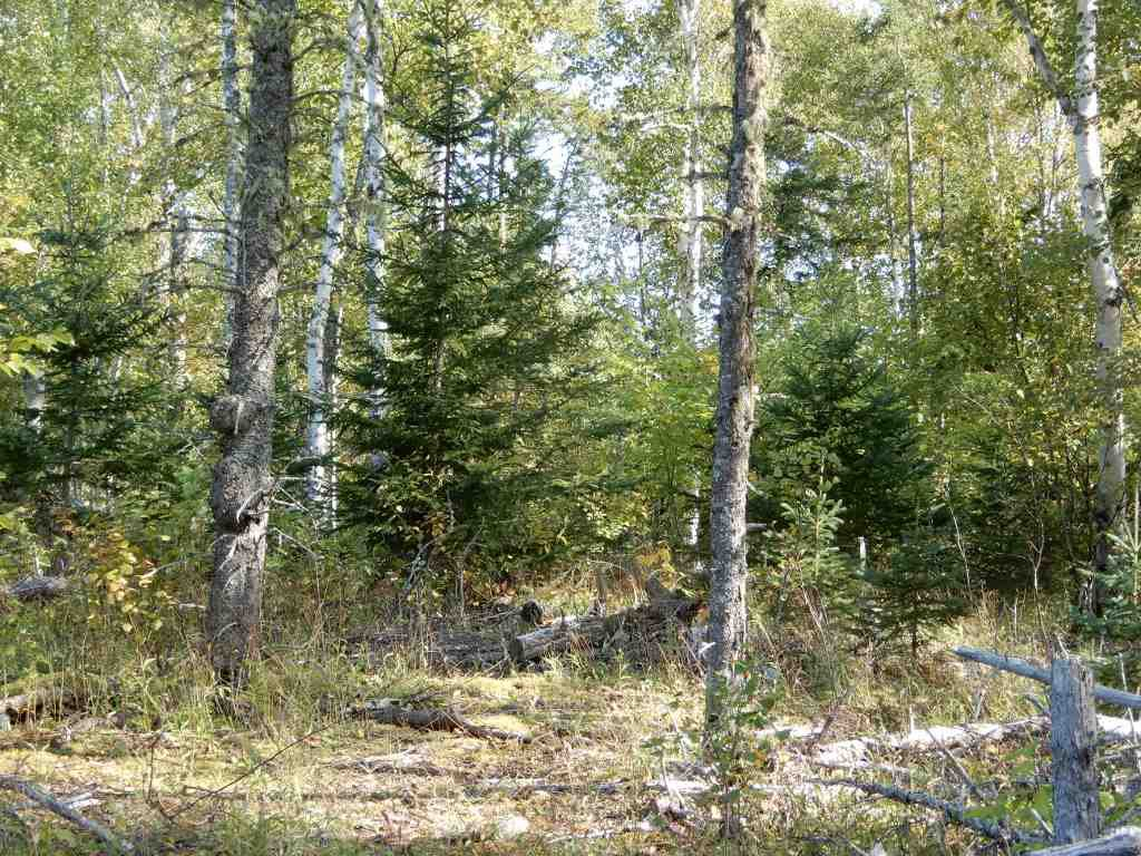 Main Photo: Tanner Hill Road in Limerock: 108-Rural Pictou County Vacant Land for sale (Northern Region)  : MLS®# 202020165