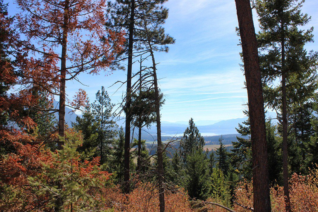 Photo 8: Photos: Lot 14 Recline Ridge Road in Tappen: Land Only for sale : MLS®# 10200569