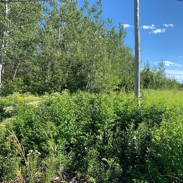 Main Photo: Lot 3 South Shore Road in Malagash: 103-Malagash, Wentworth Vacant Land for sale (Northern Region)  : MLS®# 202018772